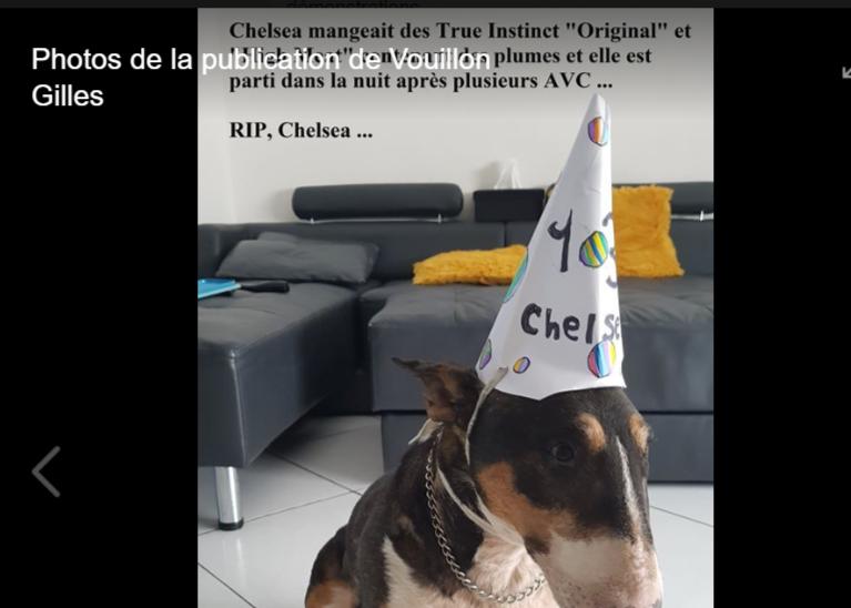 Gilles Vouillon Alerte Croquettes Toxiques